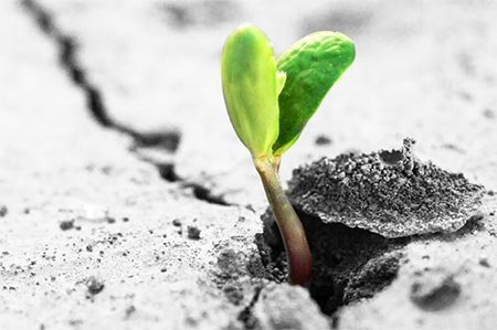 Soil, Nutrition and Food By Liz Eglington